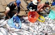 """Thuế chống bán phá giá cá tra và chuyện """"bồ nhà đá nhau trên sân khách"""""""