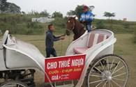 Hà Nội: Cận tết Giáp Ngọ, dịch vụ cho thuê ngựa hốt bạc