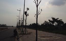 Video: Còn bao nhiêu cây còn nguyên bầu lưới bọc được trồng ở Hà Nội?