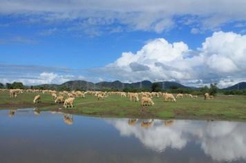 Bình yên cánh đồng cừu An Hòa, Ninh Thuận