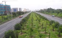 """Hà Nội: Nguy cơ cỏ mọc thành...""""rừng"""" trên một số tuyến đường"""