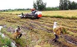 Nông dân giữa vòng vây thời tiết cực đoan