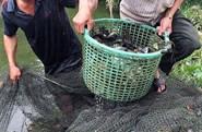 Liên kết để giữ thương hiệu cá bổi Cà Mau