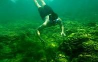 Ngỡ ngàng trước vẻ đẹp của rạn san hô ở Gành Yến