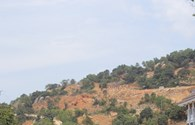 Xây dựng trên núi Sơn Trà gây nguy cơ cho voọc chà vá