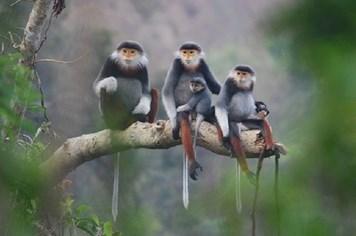 Sơn Trà trở thành khu du lịch quốc gia: Bài toán giữa bảo tồn và phát triển?