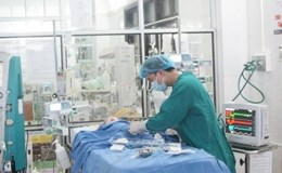 Bé trai tử vong vì nhiễm virus dại từ vật nuôi trong nhà