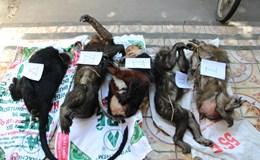 Nghệ An: Phát hiện 5 cá thể động vật quý hiếm trên xe tải