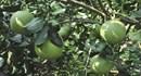 Để trái cây Việt Nam có chỗ đứng trên thị trường thế giới