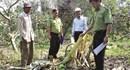 Đồng Nai: Voi rừng phá trắng hoa màu, nông dân xót xa