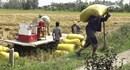Mưa nắng thất thường, đề phòng dịch bệnh hại cây trồng