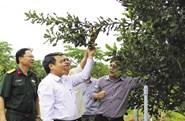 500 tỷ đồng hỗ trợ nông dân trồng cây mắc- ca tại Quảng Trị