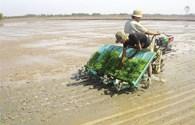 Nhà nông hết lo hạn, mặn lại đối mặt với ngập, lụt