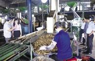 """Bình Phước trước """"cơ hội vàng"""" phát triển nông nghiệp sạch"""