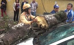 Hà Nội: Mưa gió bất ngờ, cây cổ thụ đè bẹp ôtô