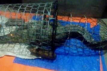 Tung lực lượng truy tìm cá sấu trên sông Tích