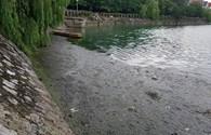 """Hà Nội: """"Cứu"""" hồ Văn Quán thoát khỏi ô nhiễm"""