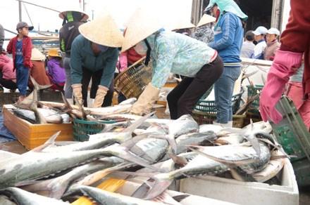 Số cá bè quỵt được đưa vào bờ, bán với giá từ 40-60 nghìn đồng/kg, với 150 tấn đánh bắt được, chủ tàu thu được khoảng 7 tỉ đồng. Ảnh: H.T