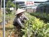 Dự án nông nghiệp 37 triệu USD: Bên bờ phá sản vì giao đất và đền bù... trên giấy