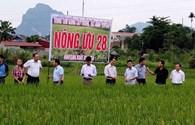 Công đoàn tích cực xây dựng nông thôn mới
