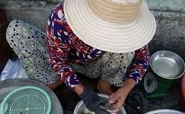 Làng Nam Ô, người dân vẫn ăn cá nóc
