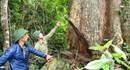 Khôi phục rừng, Gia Lai kiểm tra các xưởng gỗ