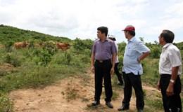 Dự án nông nghiệp 37 triệu USD tại Quảng Trị: Mắc-ca, bao giờ hết mắc?