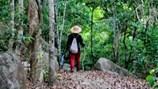 Tản mạn: Đường rừng
