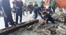 Giao Bộ Công an làm rõ đường dây vận chuyển trái phép ngà voi