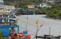 Bình Thuận: ATNĐ tan, ngư dân ra biển đánh bắt trở lại