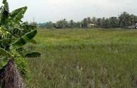 Vì sao nông dân bán đất chuyển nghề?