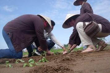 Trải nghiệm làng rau Việt