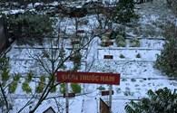 Tuyết rơi ở Sapa và Y Tý, nhiệt độ xuống -3 độ C