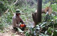 Về 2 dự án xoá rừng nuôi bò làm sân golf ở Phú Yên: Cử tri bức xúc, yêu cầu làm rõ trách nhiệm