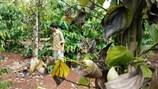 Loay hoay thích nghi với biến đổi khí hậu