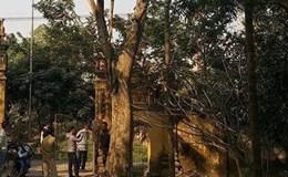 Khuất tất trong vụ mua bán cây sưa 24,5 tỉ đồng ở Bắc Ninh