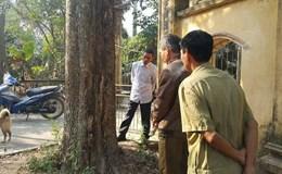 Khuất tất trong vụ mua bán cây sưa 24,5 tỉ đồng ở Bắc Ninh: Dân chờ một lời hứa đúng hẹn