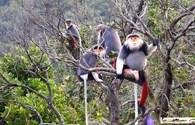 Khu bảo tồn Sơn Trà: Chọn mô hình tham quan thiên nhiên và thú đặc hữu