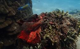 Khu bảo tồn biển Hòn Mun bị xâm hại