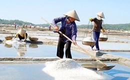 Hạt muối đắng chát