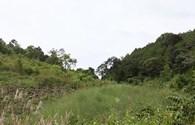 Tản mạn: Luật của rừng