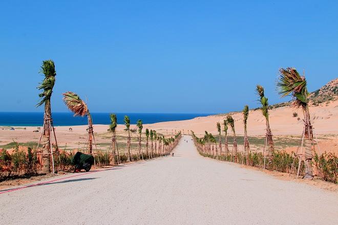 Sơn Hải - nơi đồi cát hùng vĩ chạy ra sát biển đẹp mê hồn