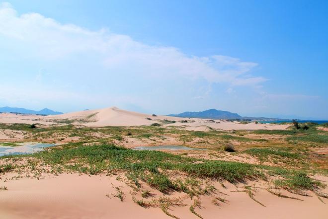 Sơn Hải - nơi đồi cát hùng vĩ chạy ra sát biển đẹp mê hồn - Ảnh minh hoạ 3