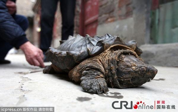 Nhiều nhất là ở Trung Quốc.