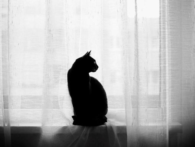 30 Hình ảnh Nghệ Thuật đen Trắng Của Mèo Tuyệt đẹp Lao