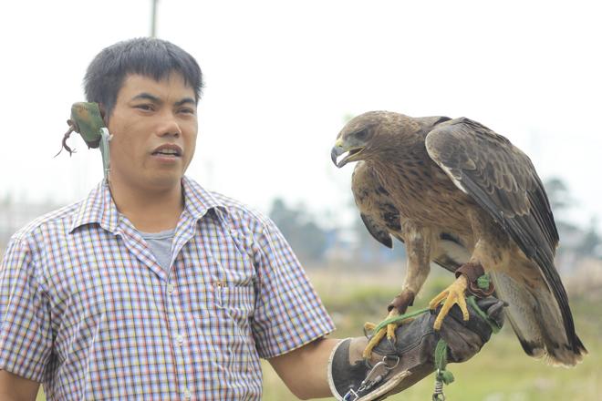 Loại Đại bàng đỏ này thường xuất hiện ở khu vực Núi gốm-Huyền Sơn. Giá một con lên tới khoảng 15-20 triệu đồng.