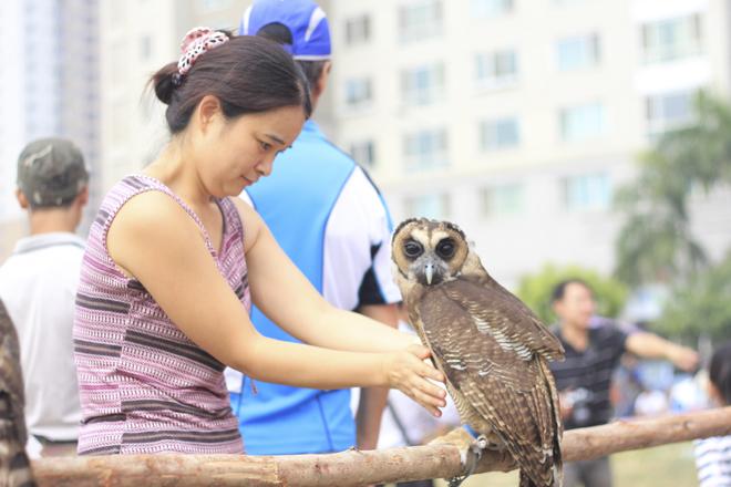 Khá nhiều người đến hội thi chim săn mồi được tổ chức ngày 6.11 tại Hà Nội thích thú với các loại chim ở đây.