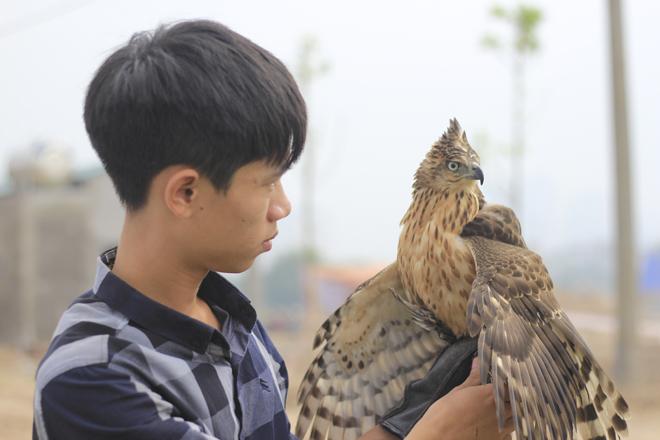Falconner (Người huấn luyện chim) Trần Quang Anh với con chim ưng Ấn Độ nặng khoảng 350 gram vừa mới thi xong của mình. Theo Quang Anh với loại chim hoang dã chưa qua huấn luyện có giá khoảng 1,5 triệu. Sau huấn luyện có thể lên tới 5 triệu.