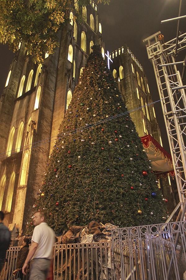 Một cây thông lớn được đặt trước cửa Nhà thờ.